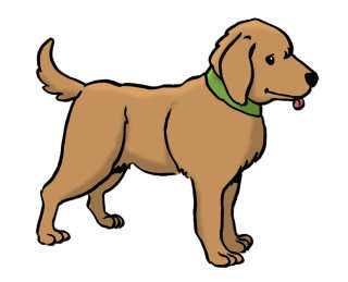 Hund Anmelden Stadt Koln