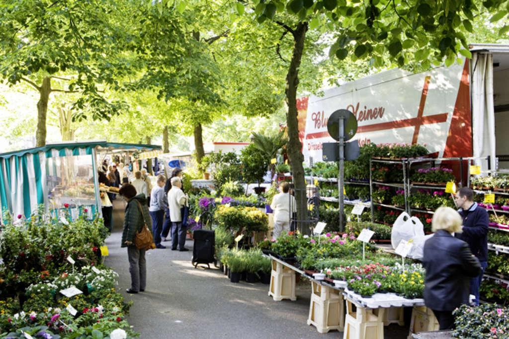 Wochenmärkte In Köln