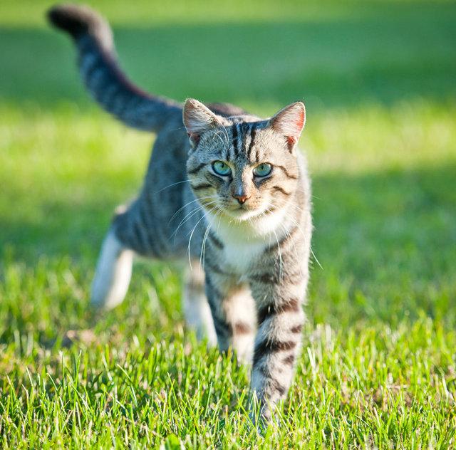 hintergrundbilder katzenbabys kostenlos